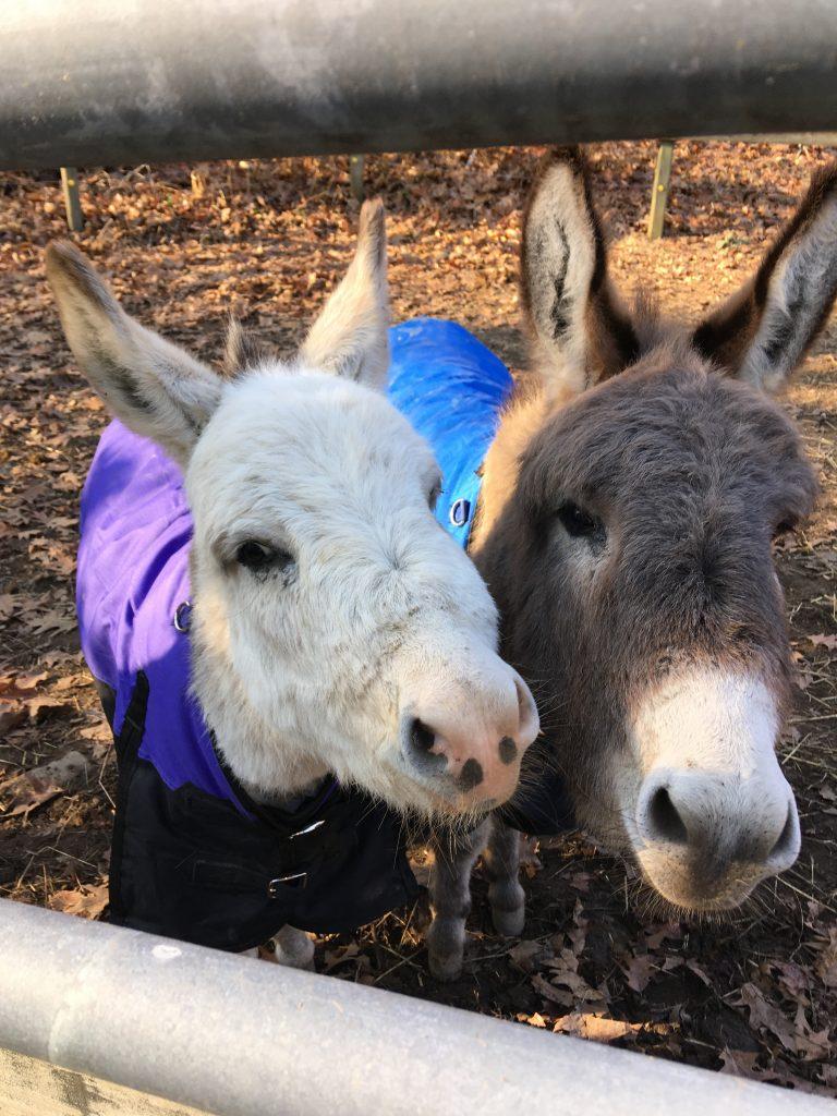 Donkey Party Crashers